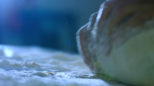 woman hand kneading dough - home made stock videos and b-roll footage
