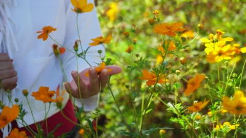 mano donna guardando i fiori sul campo - touching video stock e b–roll