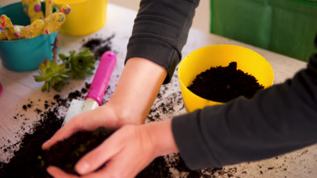woman hand planting flowers in pot with dirt or soil - plant pot stock videos & royalty-free footage