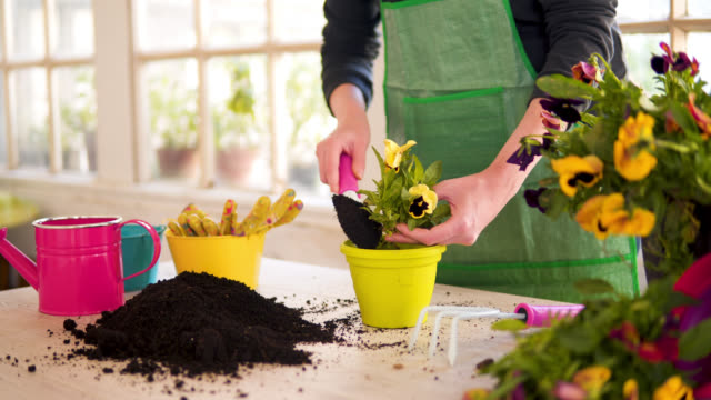 vídeos de stock e filmes b-roll de woman hand planting flowers in pot with dirt or soil - vaso de flor