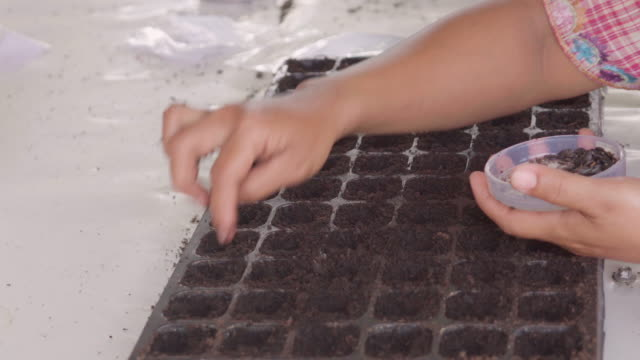 vídeos de stock e filmes b-roll de woman hand sowing watermelon seeds on tray. - semente
