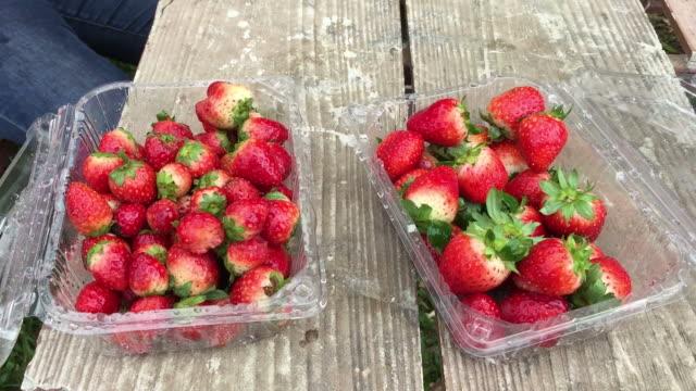 vídeos de stock e filmes b-roll de woman hand take fresh strawberry from box - ramo parte de uma planta
