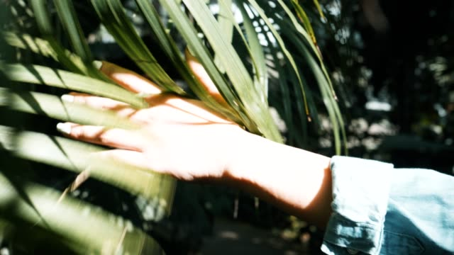 vidéos et rushes de cu: main femme toucher feuille verte dans le champ - plante herbacée