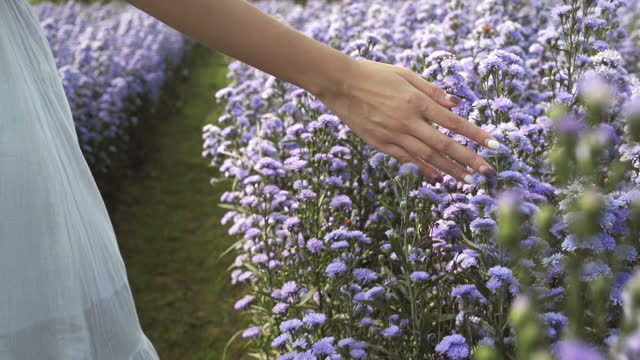 slow mo woman hand touching blossoms of purple flower field - white dress stock videos & royalty-free footage
