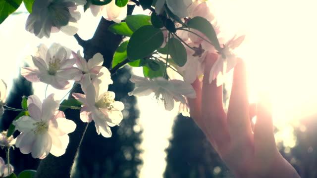 花に触れる女性手 - touching点の映像素材/bロール