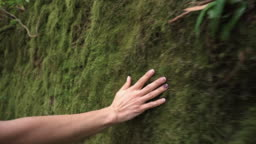 Woman hand touching softly the moss on the wall in the tropical rainforest.