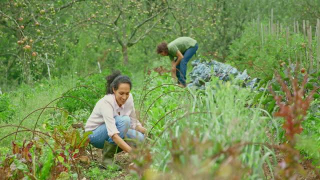 vidéos et rushes de femme désherbant son jardin de permaculture - jardiner