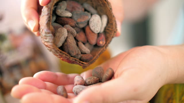 woman hands holding cocoa seed , dolly shot , slow motion - bean stock videos & royalty-free footage