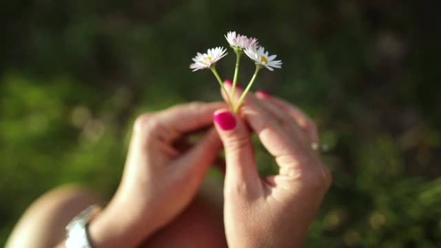 woman hands playing with daisy flowers - choosing stock videos & royalty-free footage