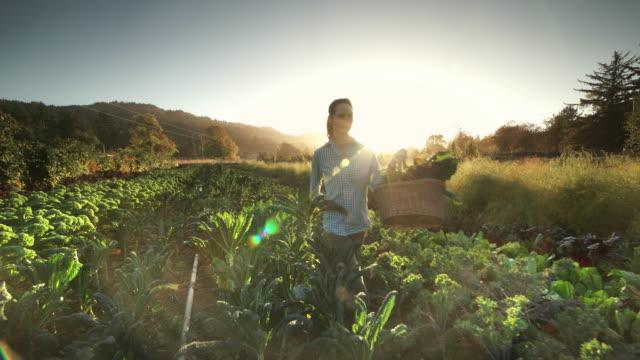 Woman harvesting vegetables on Organic farm
