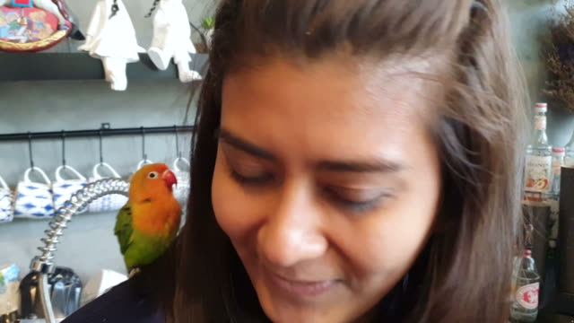 woman having fun playing with parrots - parrot stock videos & royalty-free footage