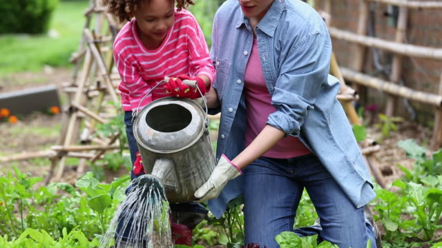 vidéos et rushes de ms td woman helping young daughter water tomato plant in home vegetable garden / richmond, virginia, usa - jardiner