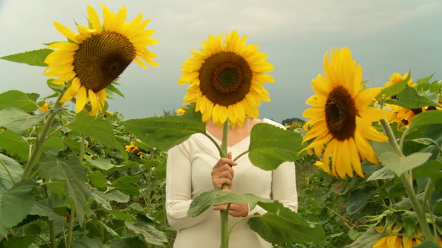 hd dolly: woman hiding behind sunflower - in front of stock videos and b-roll footage