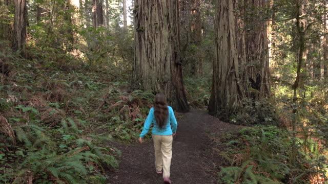 vídeos de stock, filmes e b-roll de alpinista de mulher explora crescimento velho floresta do parque nacional redwood de califórnia - parque nacional de redwood