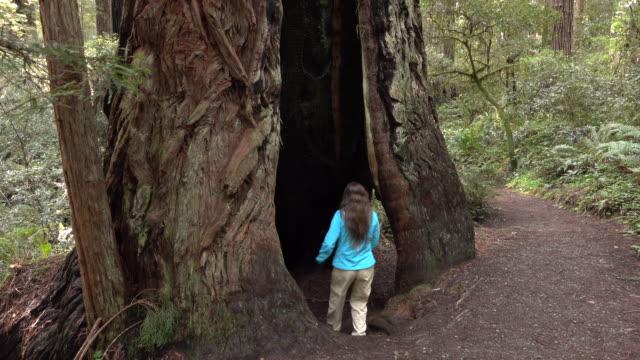 Kvinna hiker utforskar gammal skog Redwood National Park Kalifornien