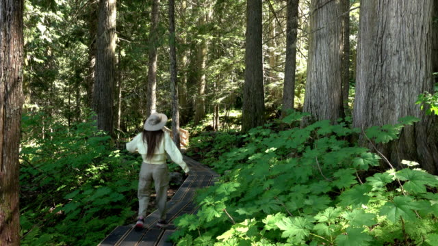 Woman hikes old-growth red cedar Ancient Forest Provincial Park Prince George British Columbia