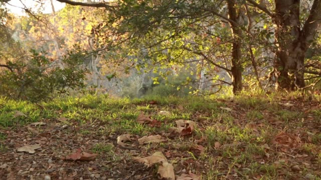 vídeos de stock e filmes b-roll de woman hiking in sunlit mountains - só uma mulher madura
