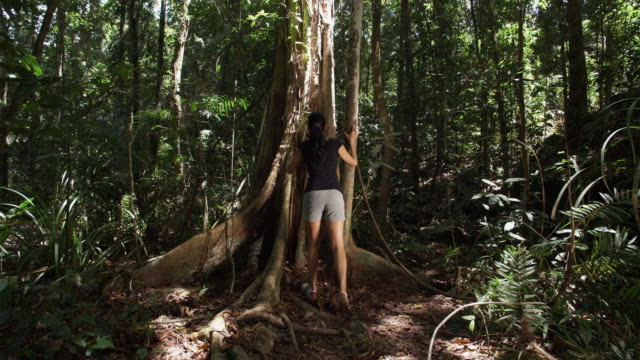 WS, TU, Woman hiking in tropical rainforest, rear view, Mossman, Queensland, Australia