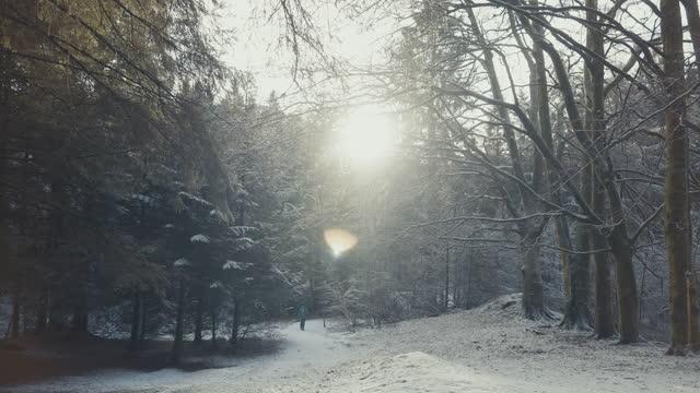 stockvideo's en b-roll-footage met vrouw die in openlucht in bos tijdens een sneeuwwinterdag wandelt - springtime