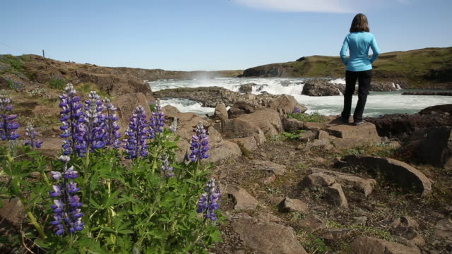 a woman hiking past lupine flowers flowing in the wind. - 60 64 years stock videos & royalty-free footage