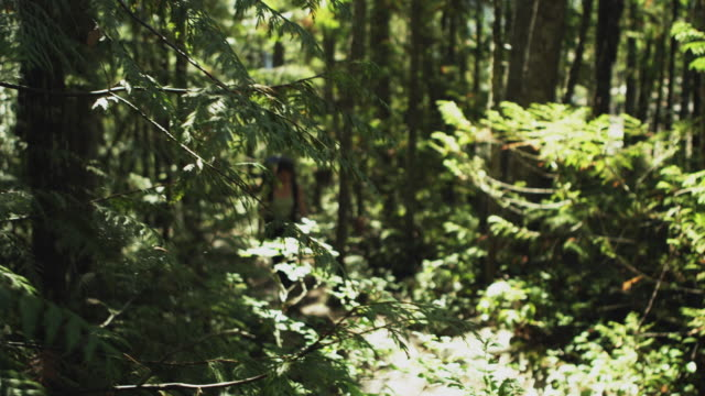 ms pan woman hiking through forest, squamish, british columbia, canada - squamish stock videos & royalty-free footage
