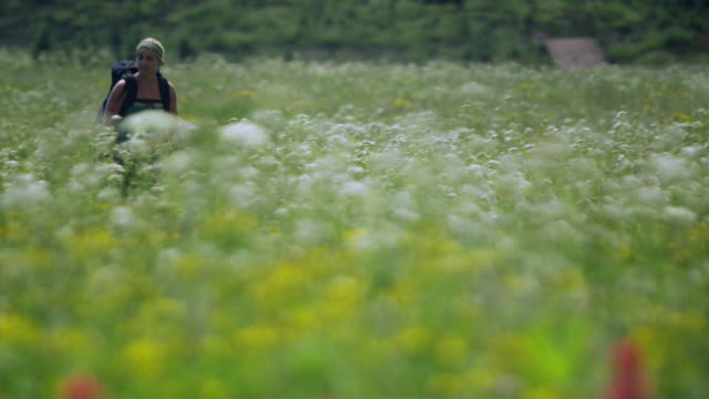 r/f ms pan woman hiking through meadow, garibaldi provincial park, squamish, british columbia, canada - squamish stock videos & royalty-free footage