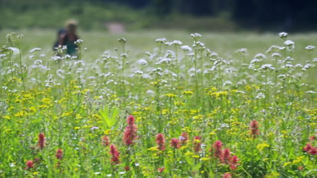 R/F MS PAN Woman hiking through meadow, Garibaldi Provincial Park, Squamish, British Columbia, Canada