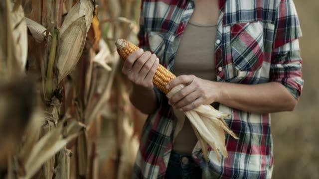 vídeos y material grabado en eventos de stock de mujer ds un maíz en el campo - miembro humano