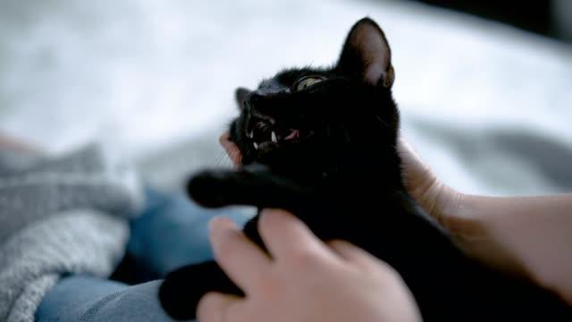 彼女の膝の上に黒猫を抱いている女性。クローズアップ - 黒猫点の映像素材/bロール