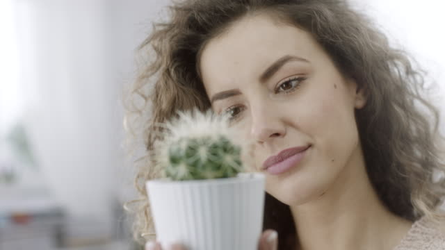 woman holding cactus - succulent plant stock videos & royalty-free footage