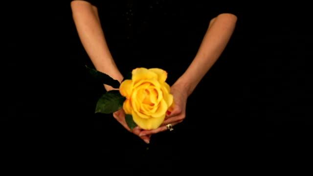 vidéos et rushes de femme tenant une rose jaune - jaune