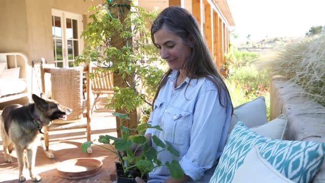 woman holding potted plant - front stoop stock videos and b-roll footage