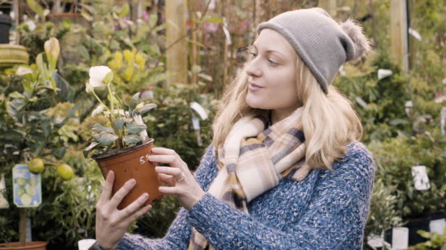 Woman holds and looks at a Hellebore plant in city garden center.