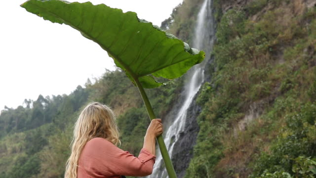 woman holds large leaf overhead for shelter, looks towards waterfall - one mature woman only stock videos & royalty-free footage