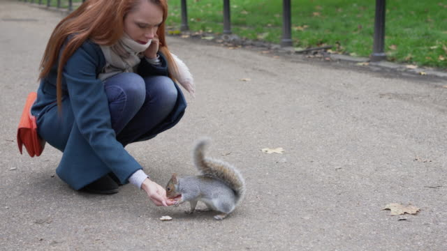 a woman holds out her hand to feed some squirrels in the park - rodent stock videos & royalty-free footage