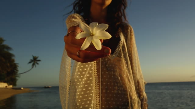 woman holds tropical flower on tahiti beach at sunset, close up - tahiti stock videos & royalty-free footage