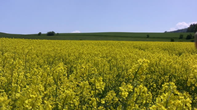 woman in canola field - crucifers stock videos & royalty-free footage