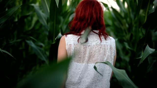 vidéos et rushes de femme dans le champ de maïs - cereal plant