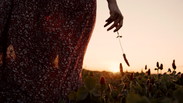 slow motion woman in dress walking through the clover field at sunset - 1 minute or greater stock videos & royalty-free footage