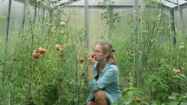 woman in greenhouse. checking tomatoes - hobby video stock e b–roll