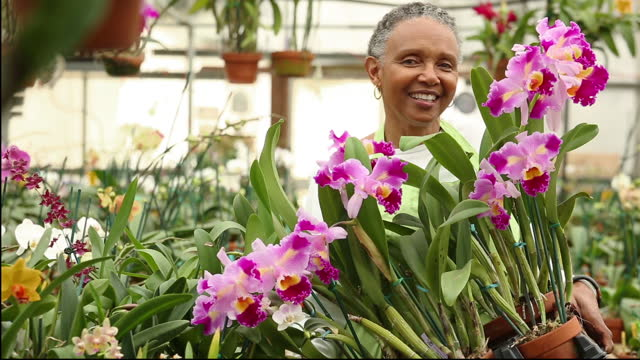 woman in greenhouse of orchids