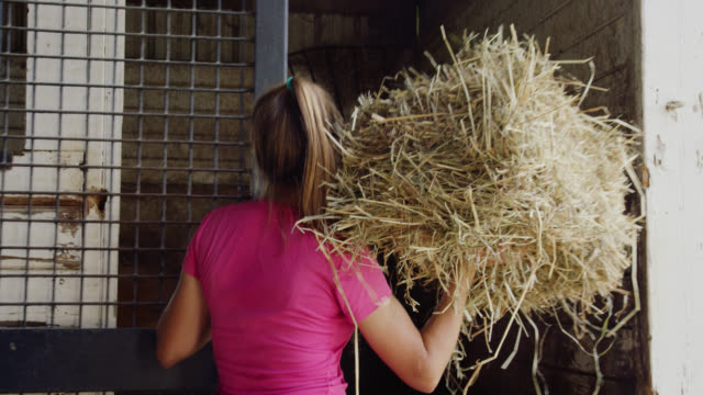 vídeos de stock e filmes b-roll de a woman in her twenties opens a the door of a horse stall and throws in some hay for her horse to eat in a barn on a farm - criação