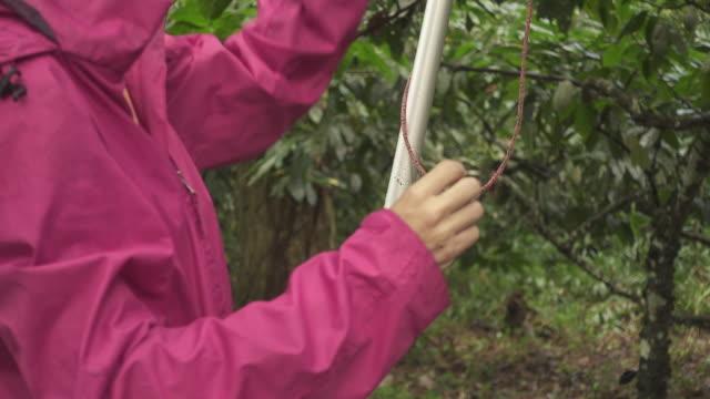 vídeos de stock, filmes e b-roll de mulher de rosa falando com um grupo de pessoas em uma floresta brasileira - rosa cor