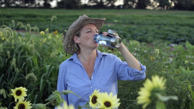 ms woman in sunflower field drinking water / lebonan township, new jersey, usa - flasche stock-videos und b-roll-filmmaterial