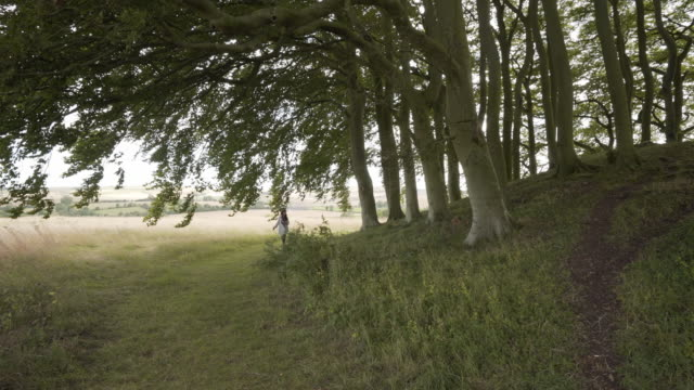 a woman in the distance through the beech trees exploring the avebury barrows at overton hill - avebury stock videos & royalty-free footage