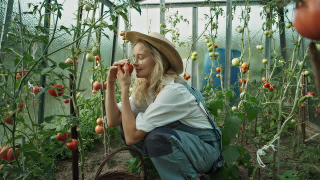 woman in the greenhouse. picking and smelling ripe tomatoes - formal garden stock videos & royalty-free footage