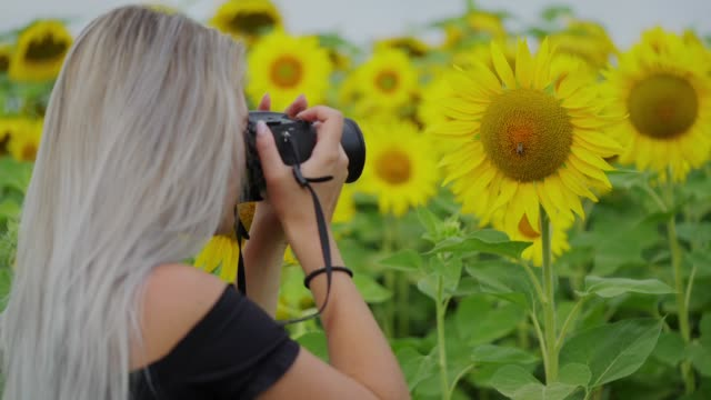 woman in the sunflower field - black dress stock videos & royalty-free footage