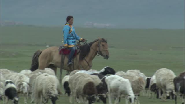 vídeos y material grabado en eventos de stock de woman in traditional mongol dress rides past sheep , bayanbulak grasslands. - oveja merina