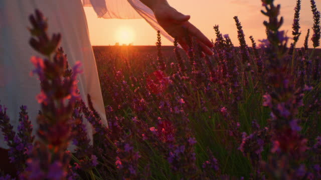 la woman in white dress touching lavender plants at sunset - scarf stock videos & royalty-free footage
