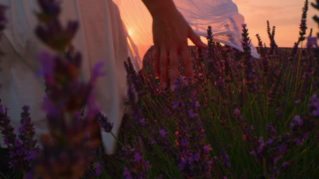 vidéos et rushes de la femme dans le sundress blanc caressant des fleurs de lavande au coucher du soleil - robe blanche